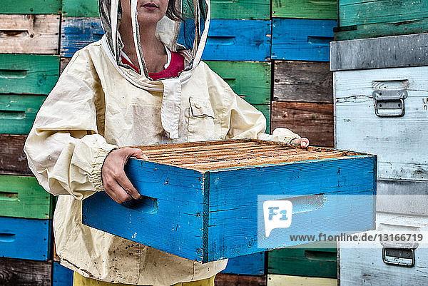Mittlere erwachsene Frau im Imkerkleid  die den Bienenstock hält  Mittelteil