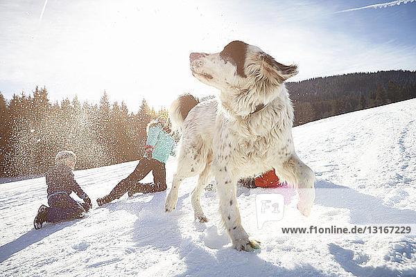 Kinder und Haushund spielen gerne im Schnee