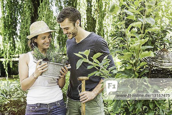 Ehepaar gärtnert  Frau hält Topfpflanze