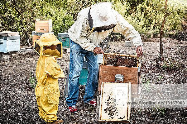 Imker hält Honigwabe  während sein Sohn zuschaut
