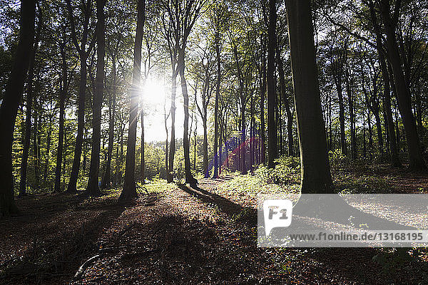 Sunlight and shadow in autumn woodlands