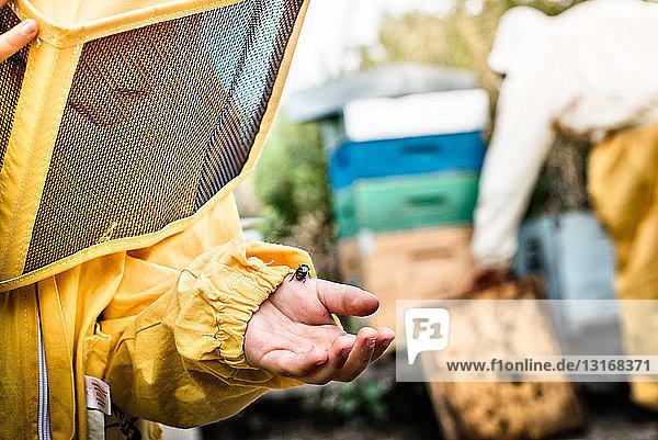 Junge Junge im Imkerkleid  hält Drohnenbiene in der Hand