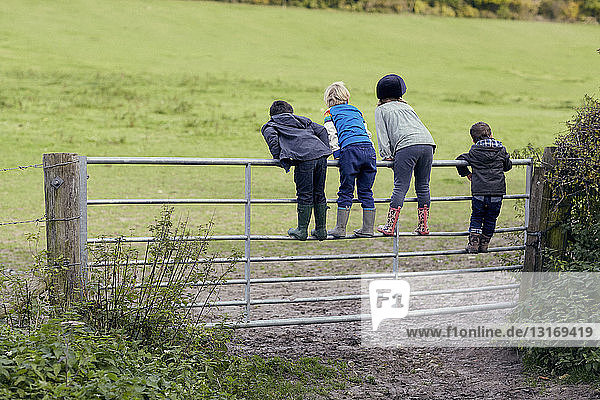 Rear view of four young children standing on gate looking out to field