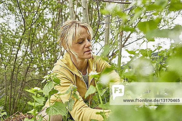 Reife Frau  Gartenarbeit  Unkraut jäten