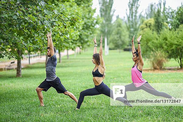 Junge Leute üben Yoga in einem Park