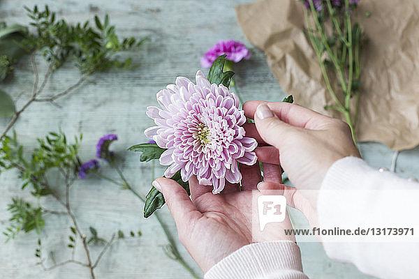 Frauenhände halten rosa Blütenkopf