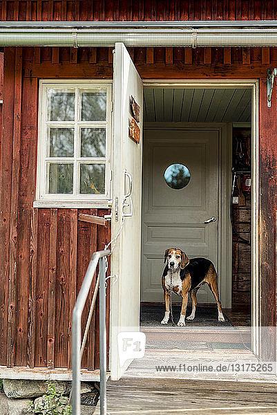 Hund steht bei geöffneter Tür im Ferienhaus und schaut nach draußen