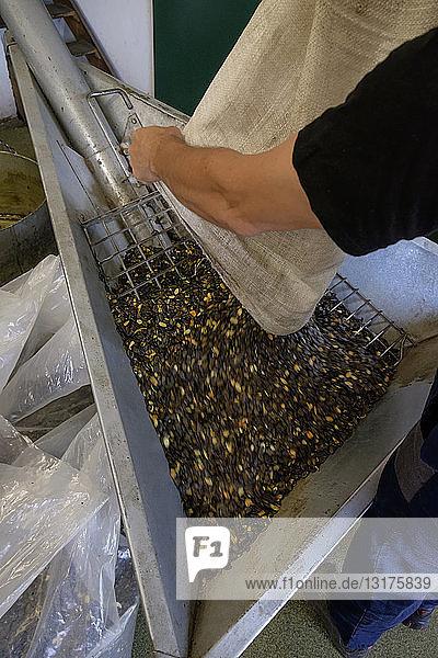 Behälter mit Kürbiskernen in einer Ölmühle
