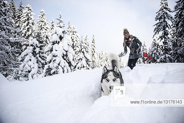Österreich  Altenmarkt-Zauchensee  junge Frau mit Hund im Winterwald