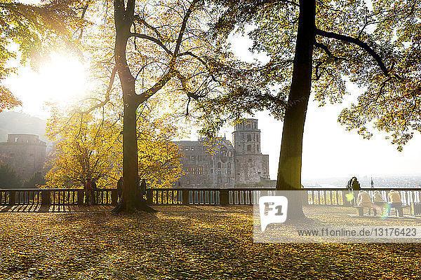 Deutschland  Baden-Württemberg  Heidelberg  Heidelberger Schloss  Schlossgarten im Herbst