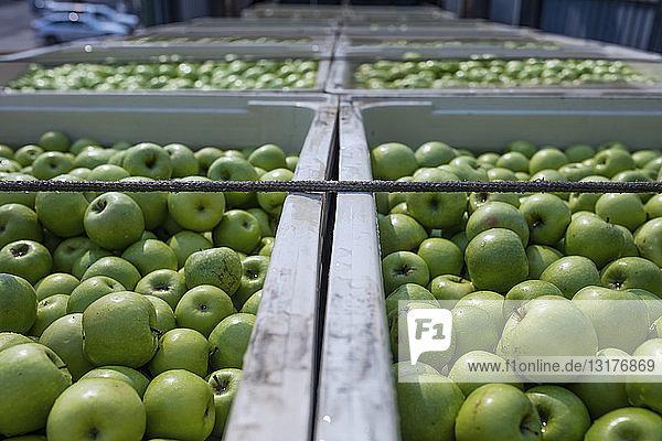 Grüne Äpfel in Kisten auf Lastwagen