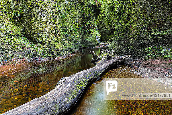 Großbritannien  Schottland  Trossachs-Nationalpark  Finnich-Glen-Canyon  The Devil's Pulpit  River Carnock Burn  Totholz