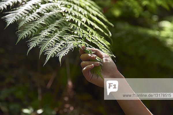 Spanien  Kanarische Inseln  La Palma  Nahaufnahme einer Hand  die ein grünes Waldfarnblatt berührt