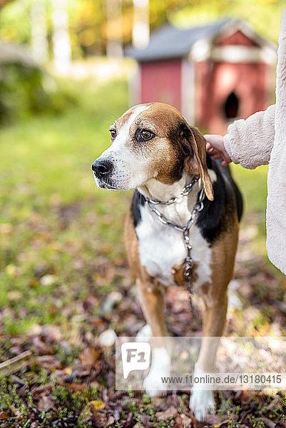 Porträt eines Hundes im Herbstgarten