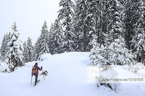 Österreich  Altenmarkt-Zauchensee  junge Frau mit Hund auf Skitour im Winterwald