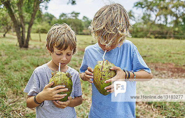 Brazil  Bonito  two boys drinking from coconut with straws