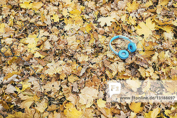 Blue headphones laying in yellow autumn leaves