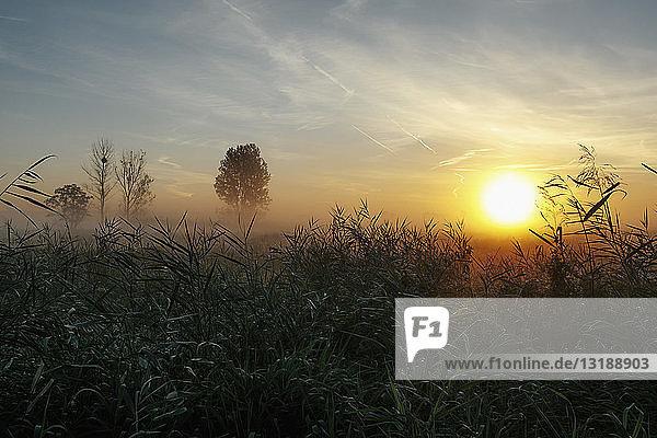 Idyllic  tranquil sunrise and fog over rural field  Leopoldshagen  Mecklenburg-Vorpommern  Germany