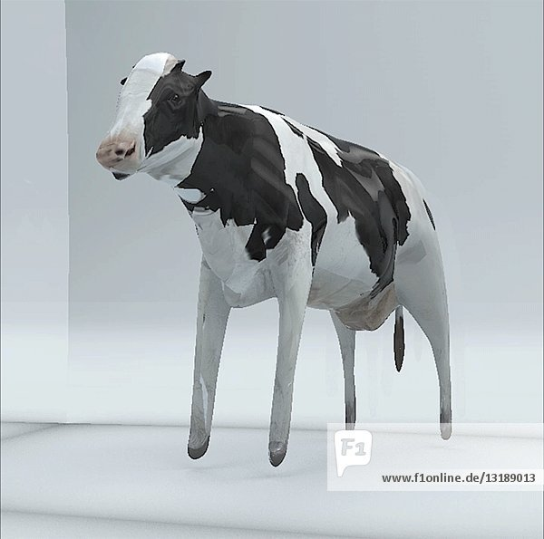 Cow in Cube  CGI Effect
