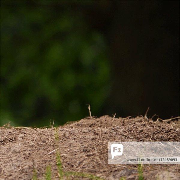 Prairie Dog Peek-a-Boo