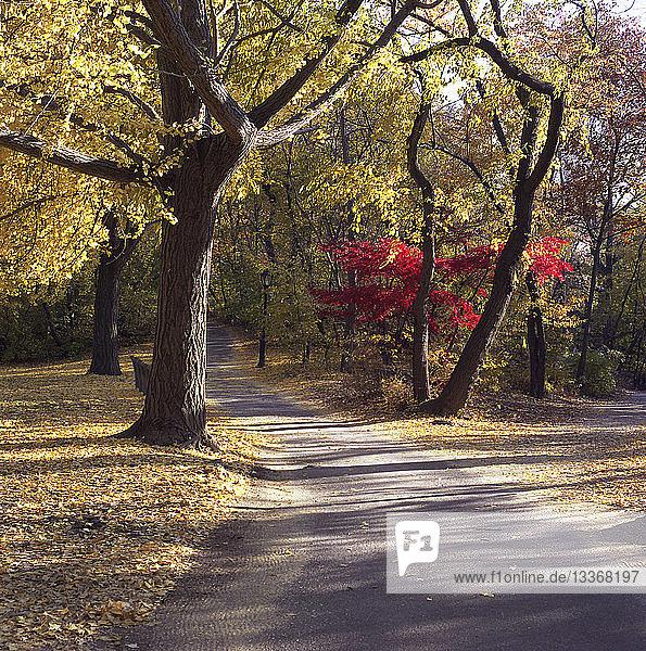 Fußweg zwischen Bäumen im Herbst im Central Park  New York City