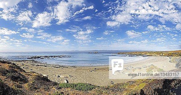 Pazifikküste mit Nördlichen See-Elefanten (Mirounga angustirostris) am Strand mit Wolkenhimmel  Piedras Blancas  Kalifornien  USA  Nordamerika