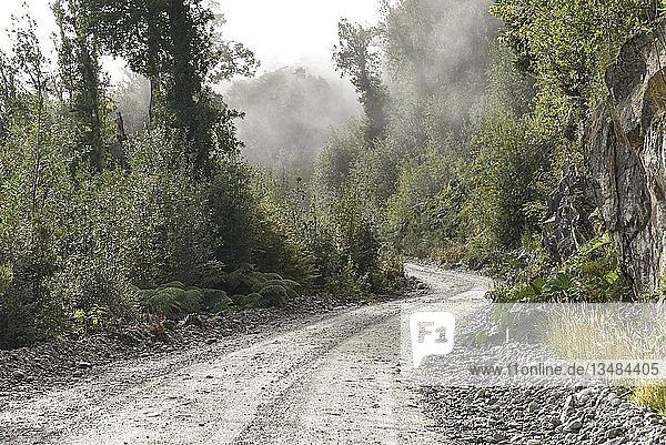 Schotterpiste in gemäßigten Regenwald mit Nebel  bei Puerto Río Tranquilo  Carretera Austral  Valle Exploradores  Laguna San Rafael National Park  Patagonien  Chile  Südamerika