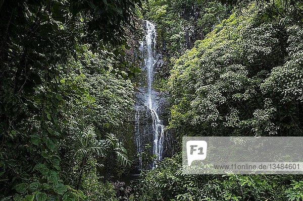 Makahiku-Fälle in grüner Vegetation  Haleakal? Nationalpark  Maui  Hawaii  USA  Nordamerika