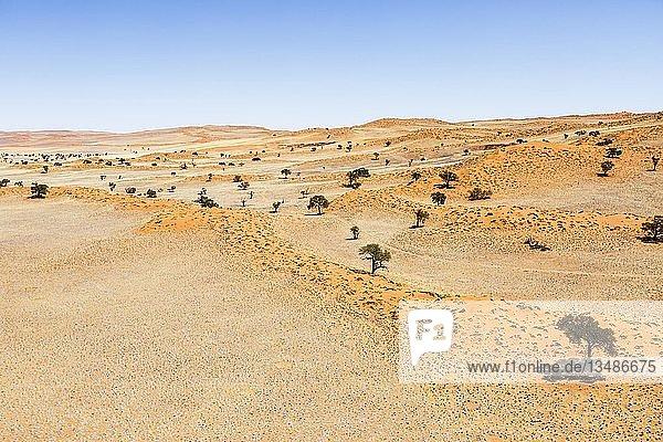 Luftaufnahme  bewachsene Dünen  Ausläufer der Namib-Wüste  Namib-Naukluft-Nationalpark  Namibia  Afrika