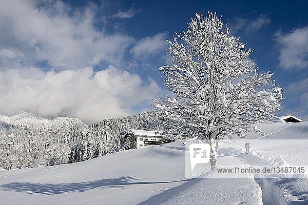 Winterlandschaft  verschneites Holzhaus  Bischofswiesen  Berchtesgadener Land  Oberbayern  Bayern  Deutschland  Europa