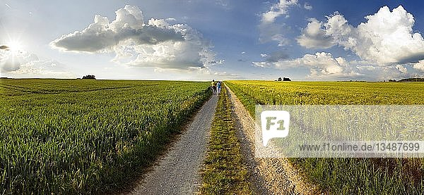 Feldweg inmitten von Getreidefeldern bei Sonnenuntergang  Adelschlag  Bayern  Deutschland  Europa