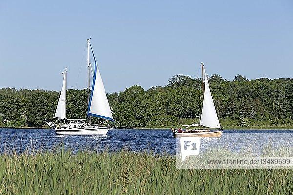 Segelboote auf der Schlei  bei Lindaunis  Schleswig-Holstein  Deutschland  Europa