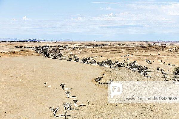 Luftaufnahme  grüne Bäume in Trockenflusslauf  Namib-Naukluft-Nationalpark  Region Erongo  Namibia  Afrika