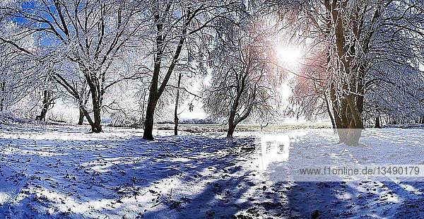 Winterliche Aufnahme einer mit Raureif vereisten Baumgruppe mit tiefstehender Sonne bei Eichstätt  Pietenfeld  Bayern  Deutschland  Europa