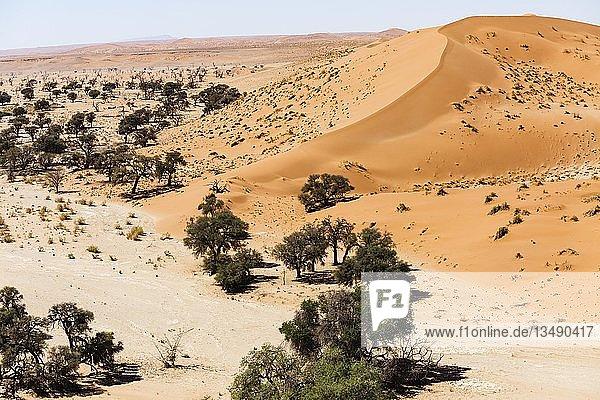 Luftaufnahme  Kameldornbäume (Acacia erioloba) im Tsondab Trockenfluss  am Fuß einer Sanddüne  Namib-Wüste  Namib-Naukluft-Nationalpark  Namibia  Afrika