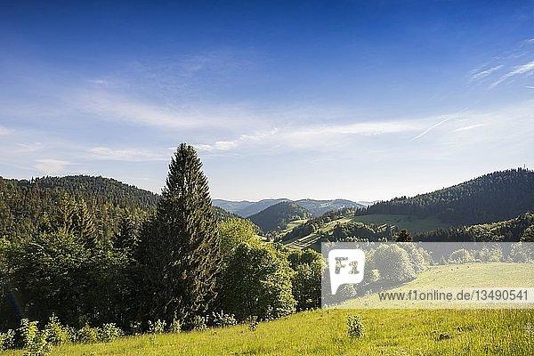 Hügellandschaft mit Wiesen und Wald  am Belchen  Kleines Wiesental  Südschwarzwald  Schwarzwald  Baden-Württemberg  Deutschland  Europa