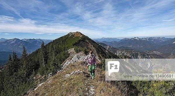 Wanderin bei der Überschreitung der Blauberge  Überschreitung von Predigtstuhl über Blaubergschneid  Blaubergkopf und Karschneid bis Halserspitz  Wildbad Kreuth  Oberbayern  Bayern  Deutschland  Europa