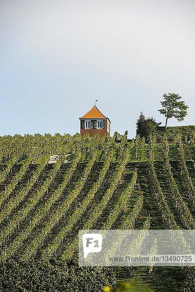 Rotes Rebhäuschen mit Weinberg  Immenstaad  Bodensee  Baden-Württemberg  Deutschland  Europa