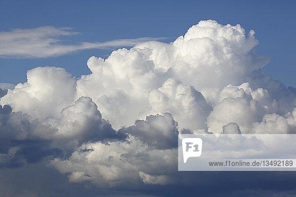 Wolkenbildung am blauen Himmel  Haufenwolken  Cumuluswolken  Schleswig-Holstein  Deuschland