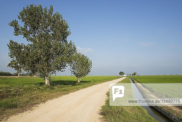 Landweg und Kanal inmitten von Reisfeldern (Oryza sativa)  der zu einem kleinen Bauernhaus führt  Naturpark Ebro-Delta  Provinz Tarragona  Katalonien  Spanien  Europa