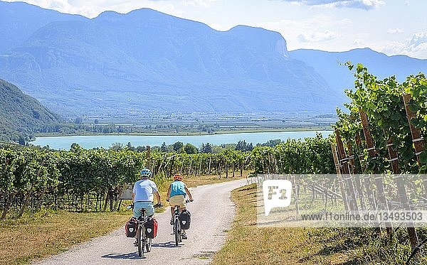 Two cyclists with mountain bike  on the Via Claudia Augusta cycle path  crossing the Alps  between vineyards  vineyards  Lake Caldaro  Caldaro  Trentino  South Tyrol  Italy  Europe