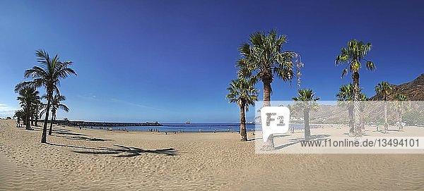 Sand und Palmenstrand des Playa de las Teresitas  Teneriffa  Kanarische Insel  Spanien  Europa