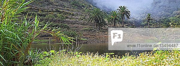 See des Embalse de Agulo mit Palmen  Agulo  La Gomera  Kanarische Insel  Spanien  Europa