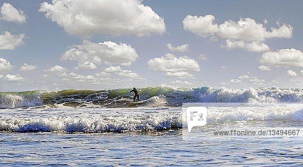 Wellenreiter in der Brandung am Pazifikstrand bei Cambria  Kalifornien  USA  Nordamerika