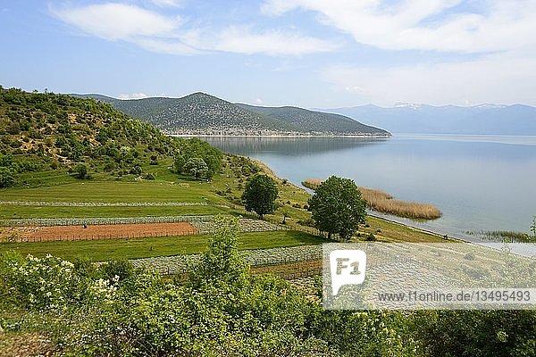 Ufer  Prespa-See  Nationalpark Prespa  Albanien  Europa