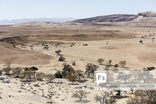 Luftaufnahme  Kameldornbäume (Acacia erioloba) im Tsondab Trockenfluss  Namib-Naukluft-Nationalpark  Namibia  Afrika