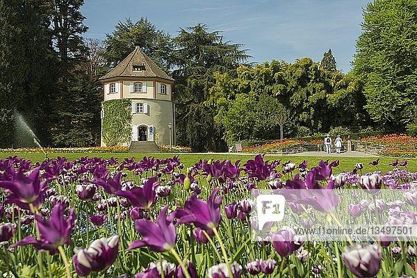 Gärtnerturm und blühende Tulpen  Insel Mainau  Bodensee  Baden-Württemberg  Deutschland  Europa