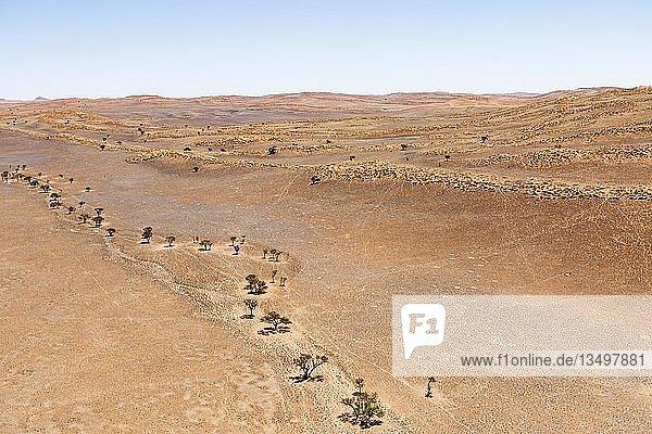 Luftaufnahme  Baumlinie entlang ausgetrocknetem Flussbett  Ausläufer der Namib-Wüste  Namib-Naukluft-Nationalpark  Namibia  Afrika