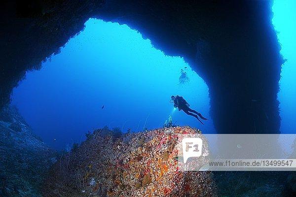 Taucher betrachtet als Sarkophag bekannte Riffformation im Torbogen vom Südplateau des Elphinstone Riff  Rotes Meer  Ägypten  Afrika