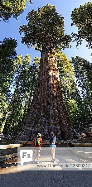 Riesenmammutbaum General Sherman (Sequoiadendron giganteum)  davor zwei Besucherinnen  Giant Forest  Sequoia-Nationalpark  Kalifornien  USA  Nordamerika